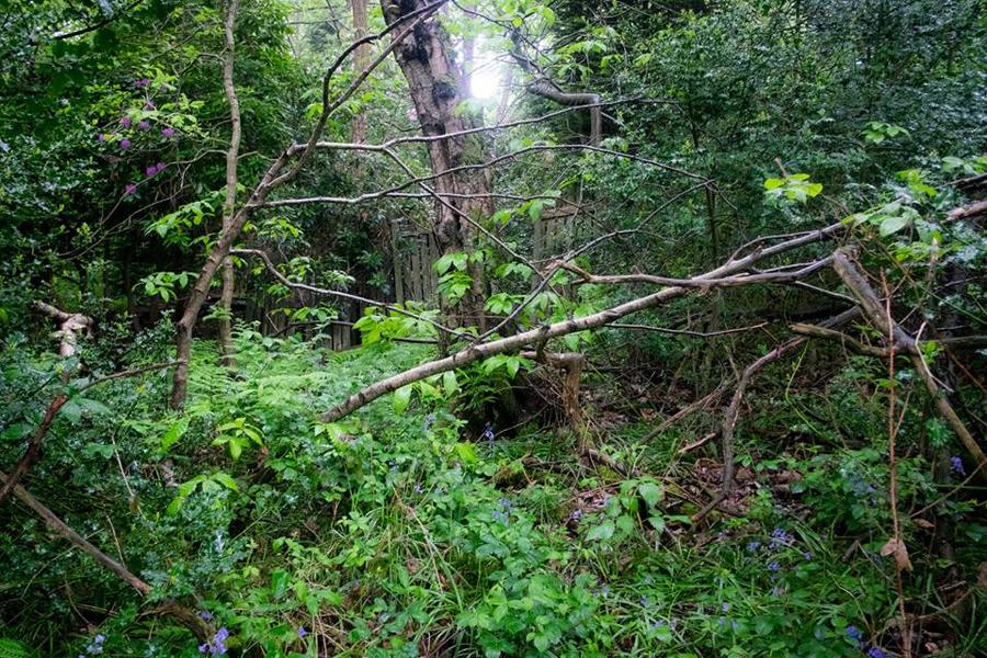 """""""Tangled vegetation"""