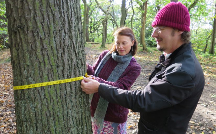 Free woodland walks at Ecclesall Woods – Sunday 20th October