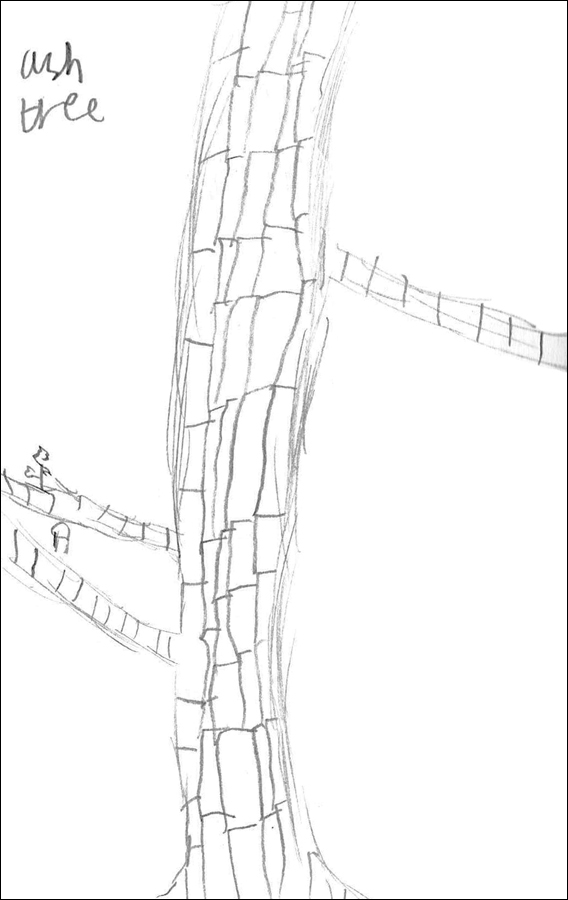 """Ash tree"