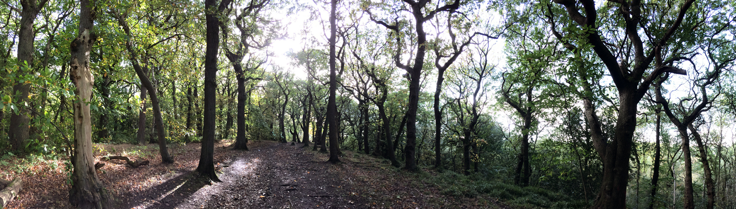 """Oak and sweet chestnut woodland"