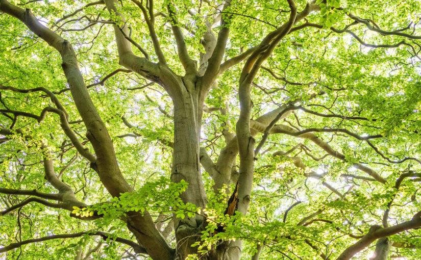 Over 50s woodland walk at Hillsborough Park
