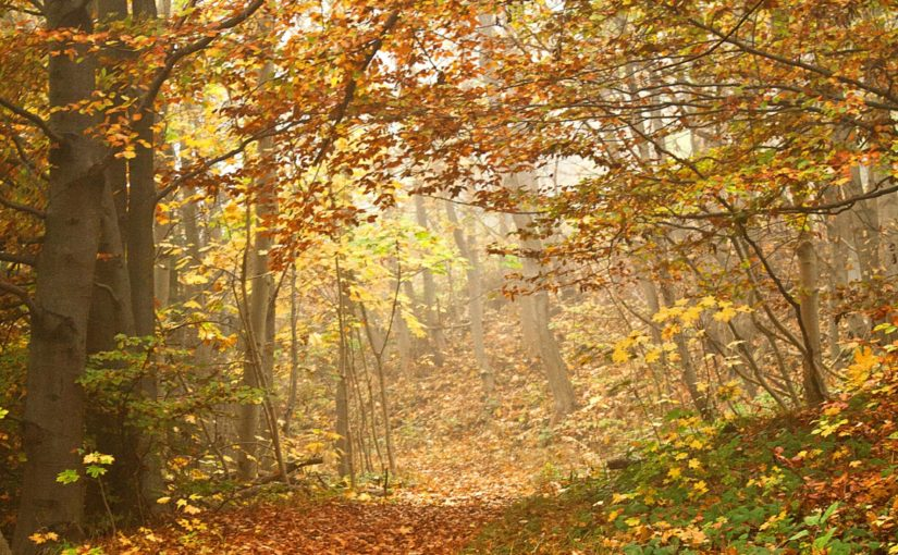 Woodland walk for Over 50s, Concord Park and Woolley Wood – 1st October 2019