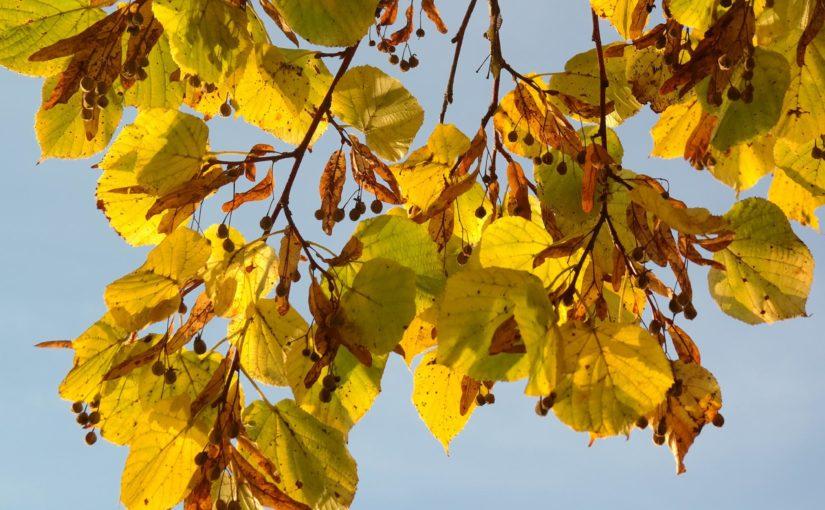 Woodland walk for Over 50s, High Hazels Park – 10th October 2019