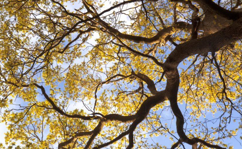 Woodland walk for Over 50s, Parkwood Springs – 1st November 2019