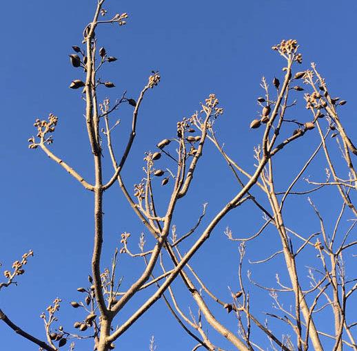 The trees of Meersbrook Park Walled Garden